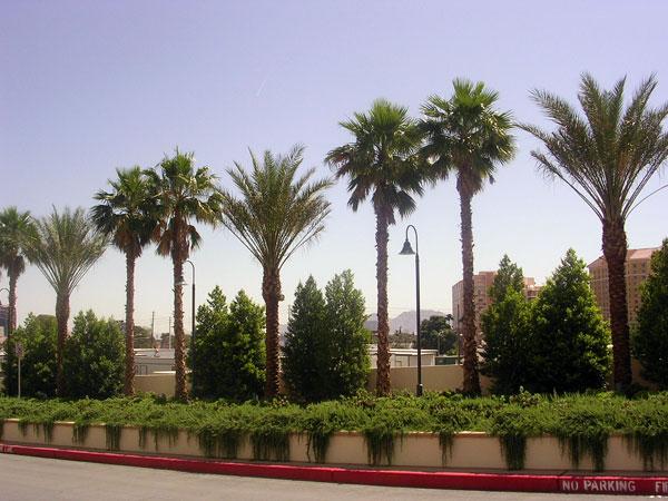 palmieri 1