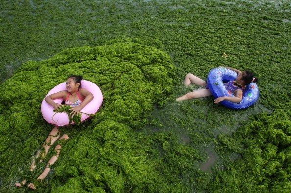 alge 2
