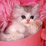 avatar kitten