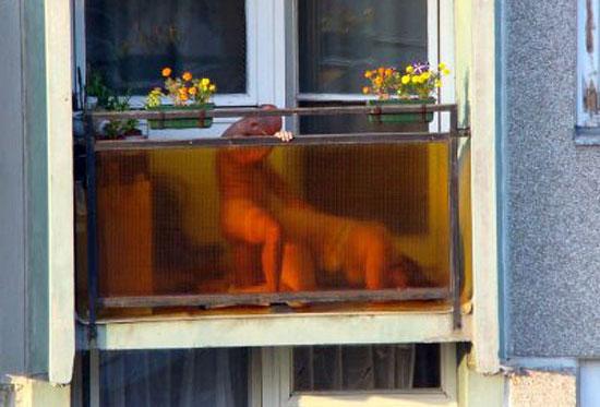 balcon xxx