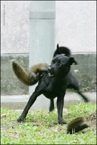 mother squirrel 3