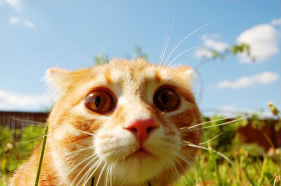 o pisica